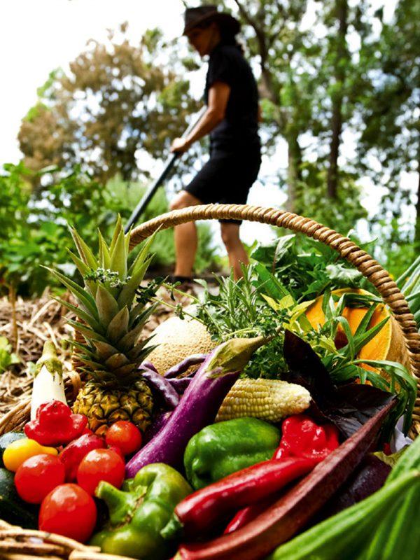 Basket of fruit and veggies in the garden